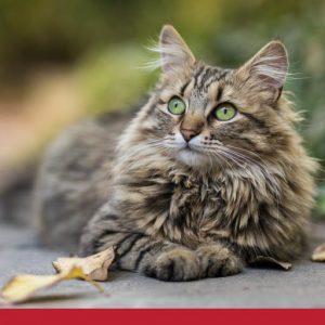 Cat Healthy Coat and Skin