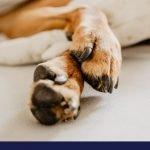 dog paws protection