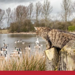 What you need to know about feral cats