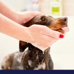 How to make your own dog shampoo