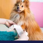 First aid for dogs part 1