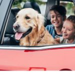 How to tackle pet transport