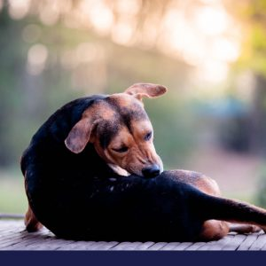 how to protect your dog and family from pests and parasites